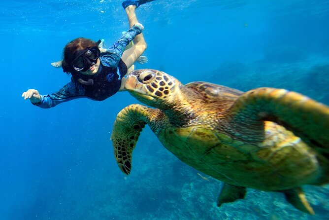 Private TURTLE tour (Worldclass photography included)