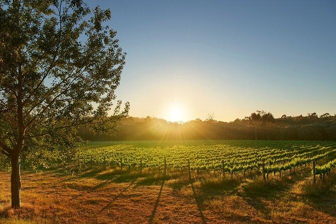 Brown Hill Winemaker's Walk