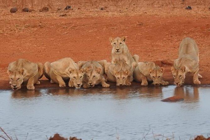 Nairobi National Park Half-Day Tour with Pickup