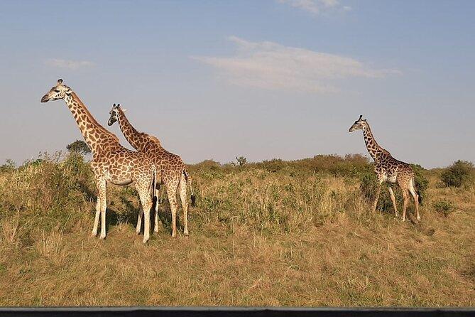 6 Days maasai mara - Lake Nakuru -Amboseli Group safari