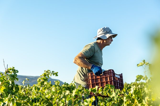 Wine Lovers - Punta Wine Experience