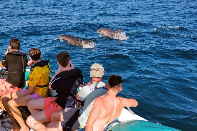 3 Hour Boat Trip in Benagil Caves and Dolphin Watching
