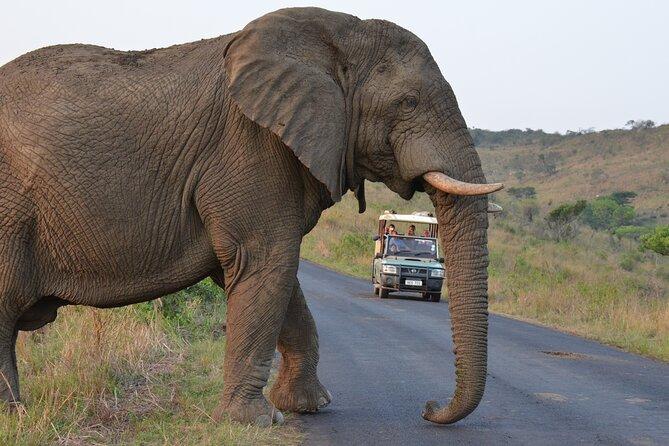 Excursión privada de un día al proyecto Hluhluwe Imfolozi Safari y Emdoneni Wild Cat Project