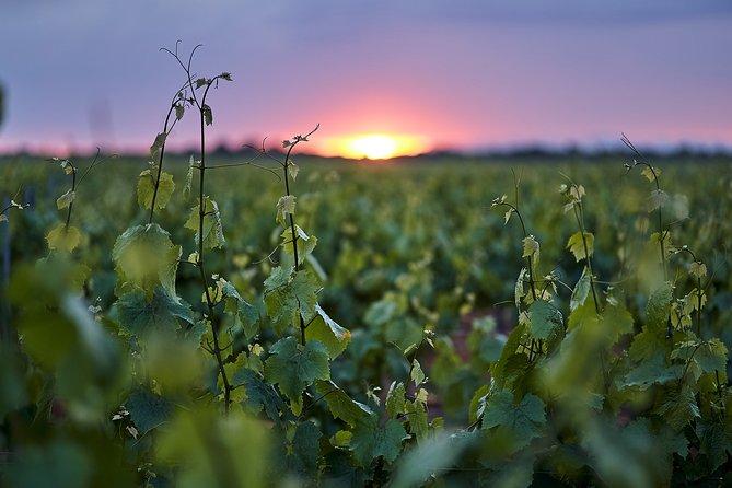 Wine tourism: Wine tasting