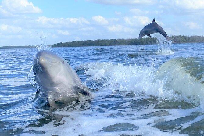 Everglades National Park Wildlife Boat Tour