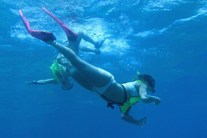 Reef and Turtle Adventure - Kayak and Snorkel Tour