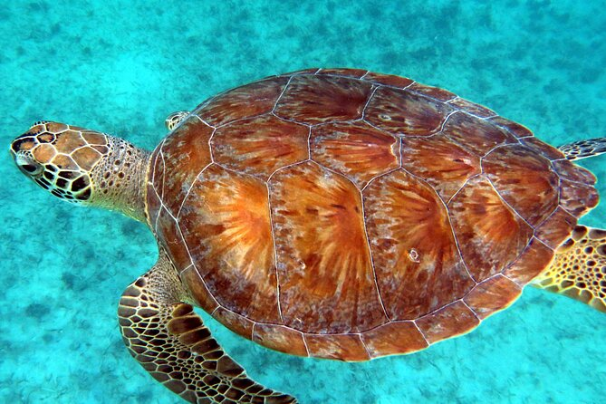 St Thomas Kayak and Sea Turtle Snorkel Excursion