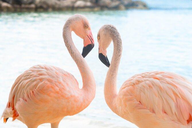 Flamingo Encounter