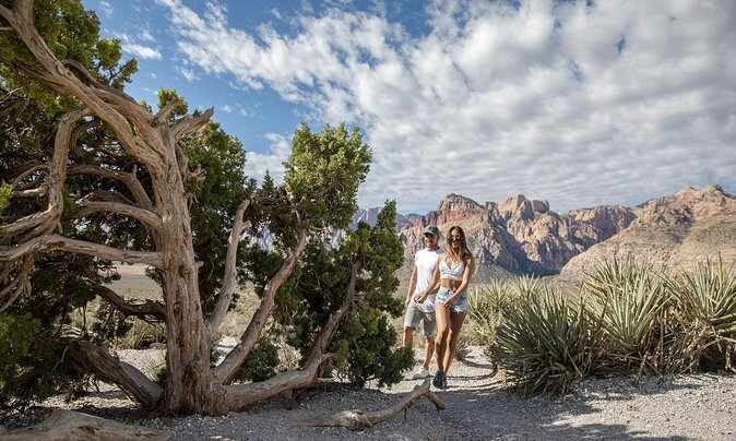 Top Hiking Trails in Red Rock Canyon