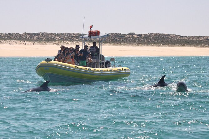 Dolphin Watching at the Arrabida (Lisbon region)