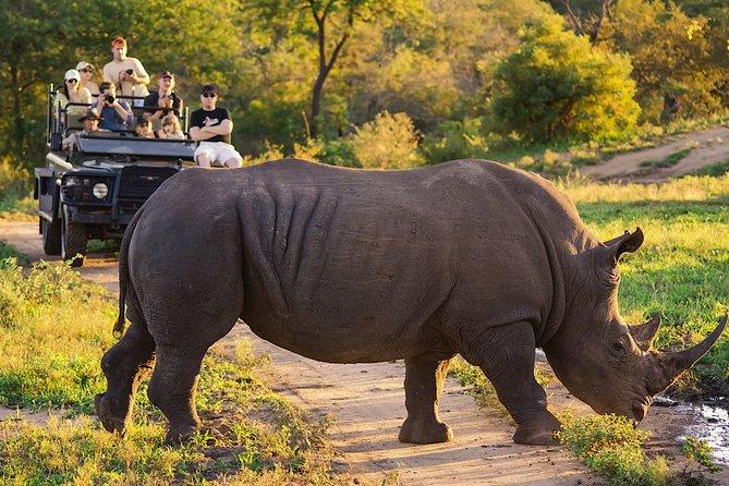 Kruger National Park Safari 1-Day Tour from Johannesburg
