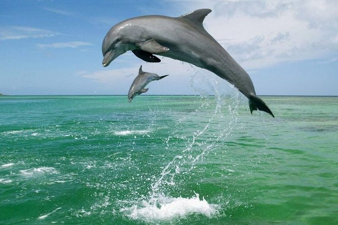 Coastline Whale & Dolphin Watching Experience