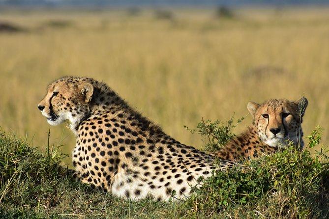 SERENGETI Day Trip from Mwanza -With- Burigi chato Safaris Co LTD