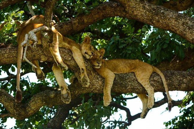 5 Days Tanzania Camping Safari, Tarangire/Serengeti/Ngorongoro Crater