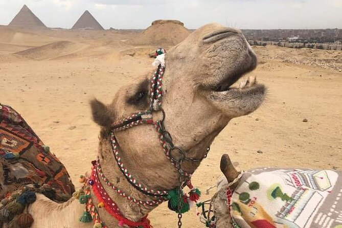 day-tour Giza pyramids including Nile Dinner Cruise and Lunch