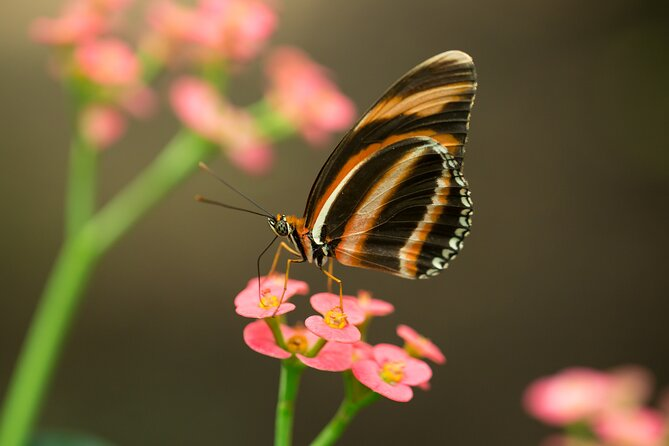 Macro Photography Workshop at Jardin Magico Butterfly Preserve