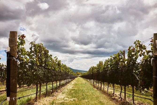 Private wine tasting & wine pairing tours