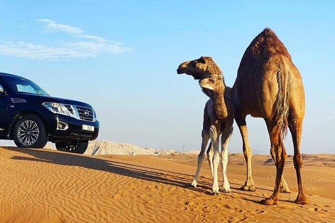 Dubai Red Dune Desert Safari Dinner Quad Bike and Camel Ride