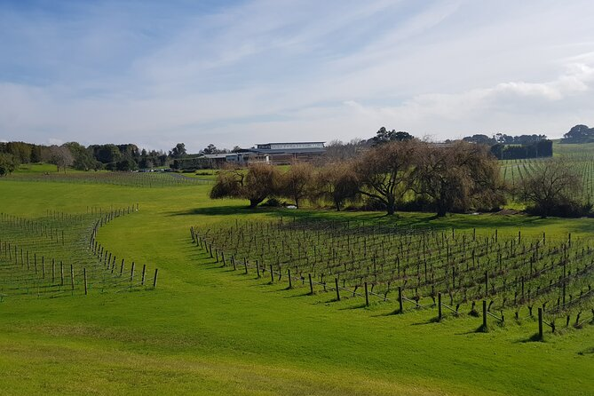 Villa Maria Wine Tour and Airport Shuttle from Auckland