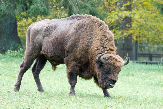 Bialowieza and Belarus 2-day Private Tour from Warsaw