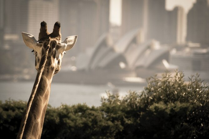 Cruzeiro Hop On Hop Off em Sydney Harbour com entrada para o Taronga Zoo