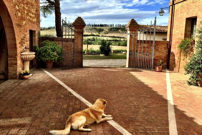 Private Dog Friendly Tour to Tuscany and Lazio - 7 nights