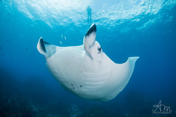 5-Hour Byron Bay Introductory Scuba Diving Tour