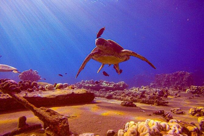South Maui Shore Dive