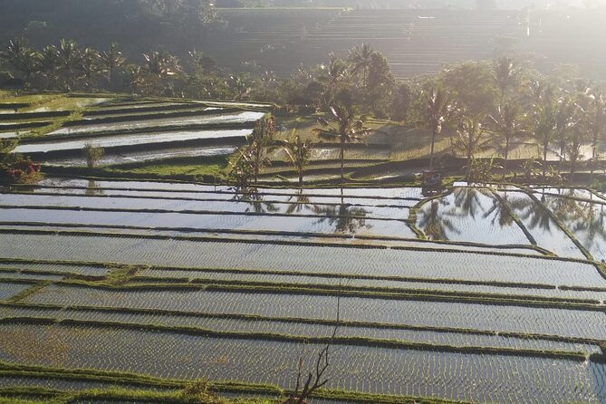Private Tour The Beauty of Waterfall and Jatiluwih Rice Terrace as a UNESCO Site