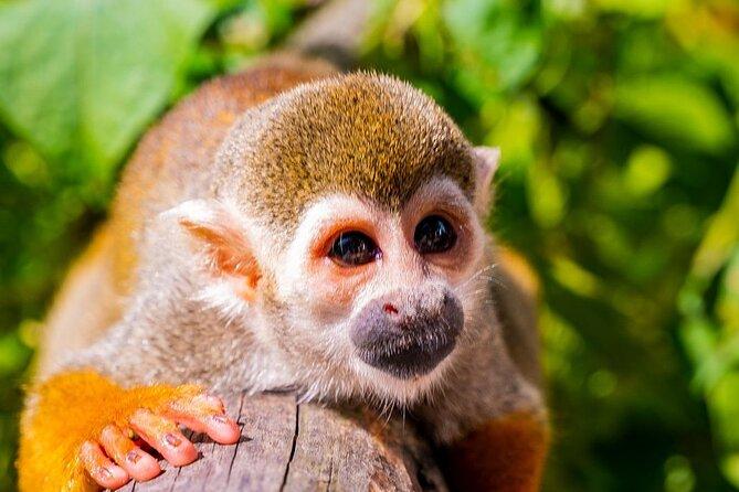 Safari Monkeyland from Punta Cana