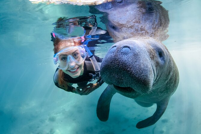 Florida Manatee Adventure, Everglades Style Airboat, Wildlife Park & Transport