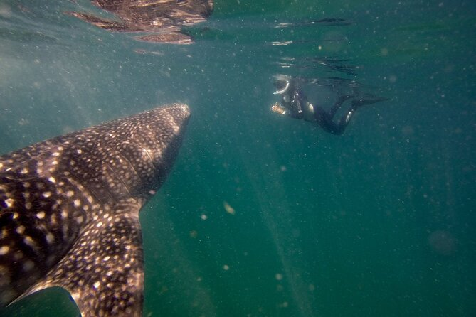 Whale Shark and Sea Lions Private Expedition Tour