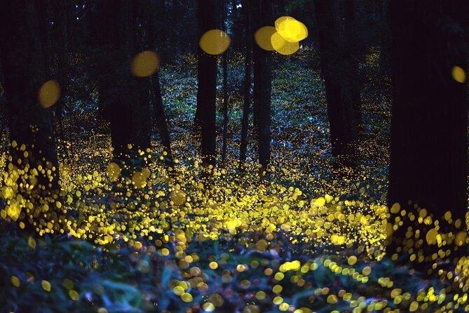 From Mexico City: Fireflies Sanctuary & Ex-Hacienda Chautla Private Tour