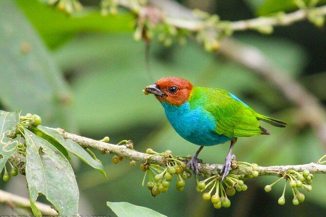 Birdwatching Tour in Via Sigsig,Chiguinda from Cuenca
