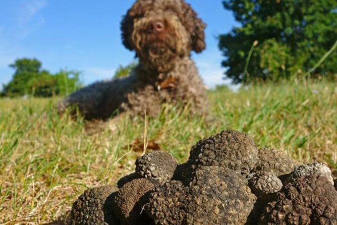 Private Traditional Truffle Hunting in the Woods with a dog