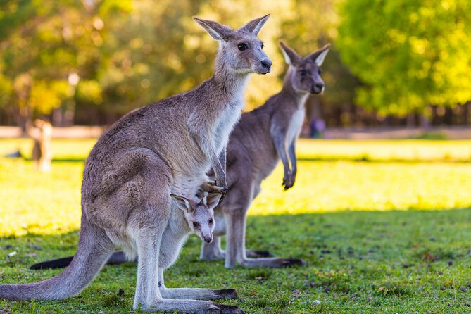 LGBT+ Friendly Full Day Phillip Island Private Tour