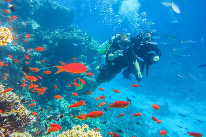 1 Day Trip to Ras Mohamed by Bus With Diving