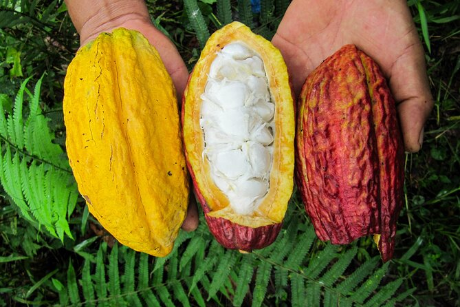Guayaquil to Cuenca + Cacao farm and Cajas N.Park & ending in Cuenca