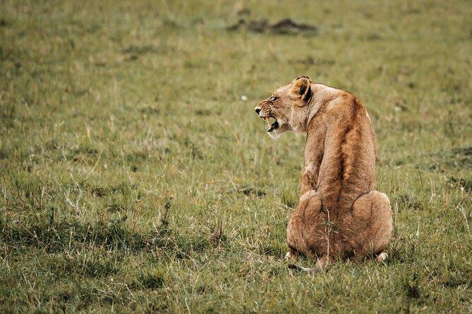 6-Day Maasai Mara, Lake Nakuru and Amboseli Safari