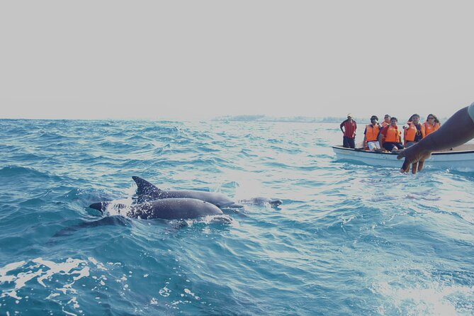 Key West Dolphin Spotting Tour and other options