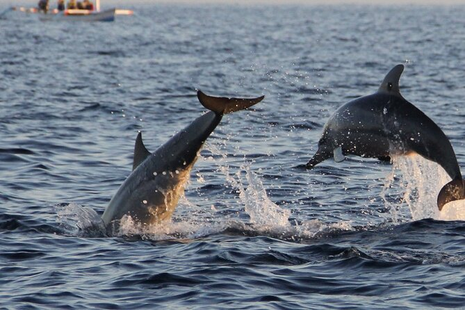 Dolphins putting on a show. You will see me on a boat tour!