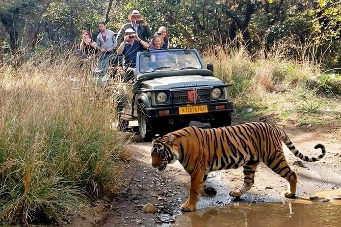 Ranthambore with Golden triangle group tour