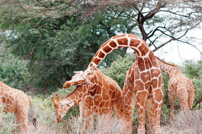 3-Day Samburu Luxury Safari
