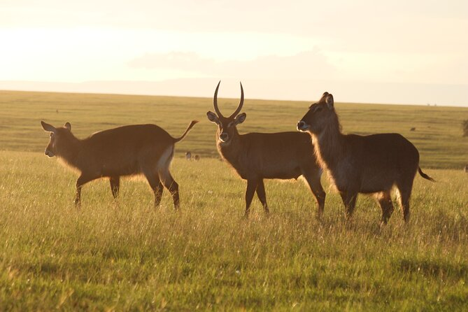 7-Day Maasai Mara Lake Nakuru Samburu and Mount Kenya Safari