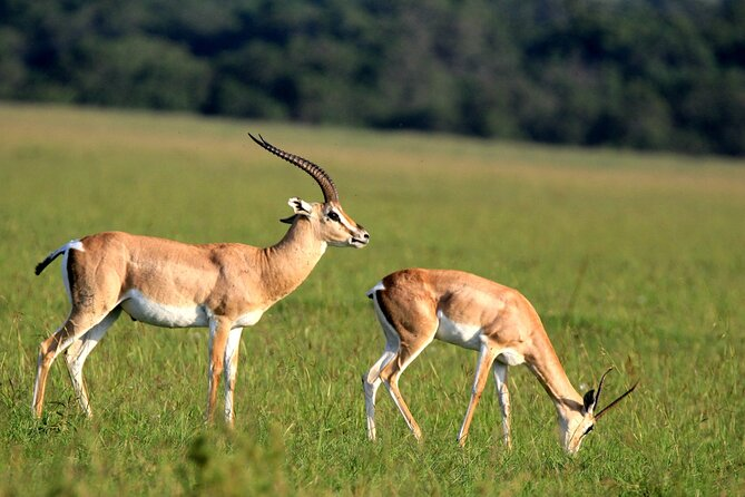 6-Day Samburu, Lake Nakuru, and Masai Mara Safari