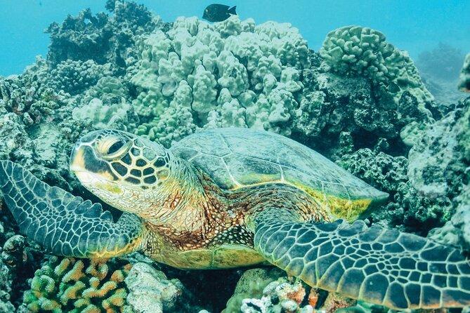 Turtle Trek in Tortuguero