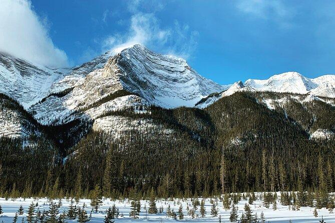 Winter Wilderness & Wildlife Walking Tour - 2hrs