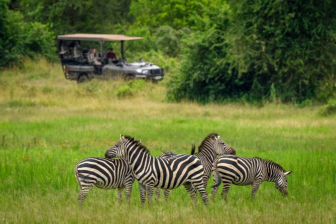 3 Game Drives, ranging from 2 - 4 hours