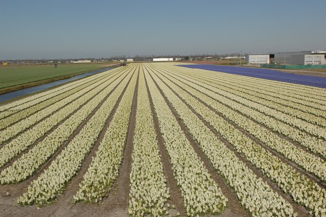 Flower Fields Bicycle Tour