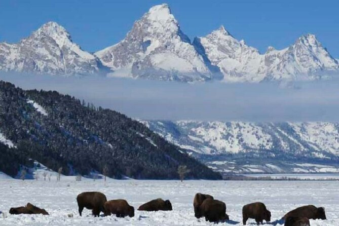 Grand Teton Park & Jackson Hole - PRIVATE Afternoon Wildlife Tour